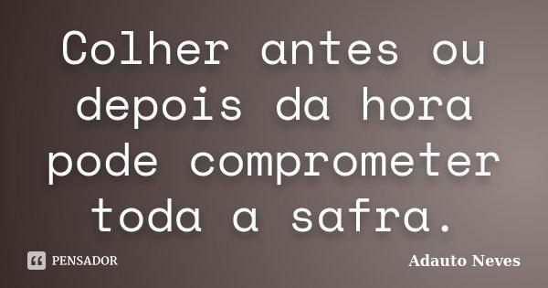 Colher antes ou depois da hora pode comprometer toda a safra.... Frase de Adauto Neves.