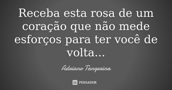Receba esta rosa de um coração que não mede esforços para ter você de volta...... Frase de Adriano Tangerina.