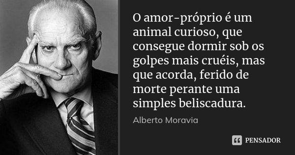 O amor-próprio é um animal curioso, que consegue dormir sob os golpes mais cruéis, mas que acorda, ferido de morte perante uma simples beliscadura.... Frase de Alberto Moravia.