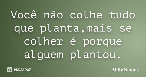 Você não colhe tudo que planta,mais se colher é porque alguem plantou.... Frase de Aldir Ramos.