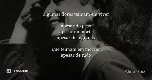 algumas flores teimam em viver apesar do peso apesar da morte apesar de algumas que teimam em morrer apesar de tudo... Frase de Alice Ruiz.