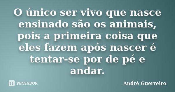 O único ser vivo que nasce ensinado são os animais, pois a primeira coisa que eles fazem após nascer é tentar-se por de pé e andar.... Frase de André Guerreiro.