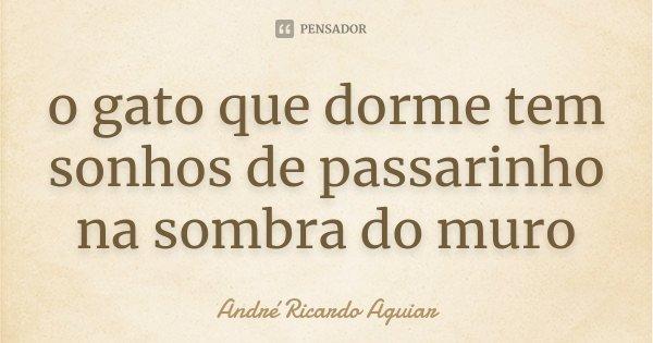 o gato que dorme tem sonhos de passarinho na sombra do muro... Frase de André Ricardo Aguiar.