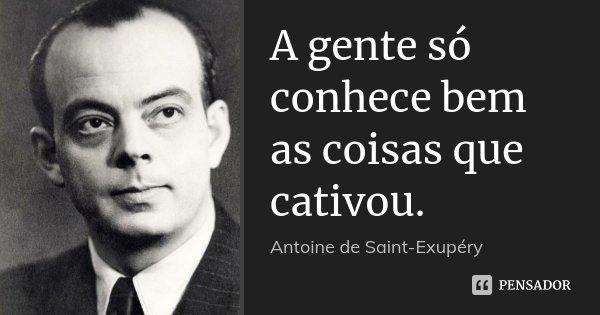 A gente só conhece bem as coisas que cativou.... Frase de Antoine de Saint-Exupéry.