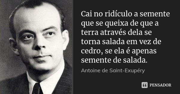 Cai no ridículo a semente que se queixa de que a terra através dela se torna salada em vez de cedro, se ela é apenas semente de salada.... Frase de Antoine de Saint-Exupéry.