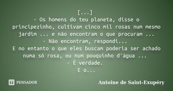[...] - Os homens do teu planeta, disse o principezinho, cultivam cinco mil rosas num mesmo jardim ... e não encontram o que procuram ... - Não encontram, respo... Frase de Antoine de Saint-Exupéry.