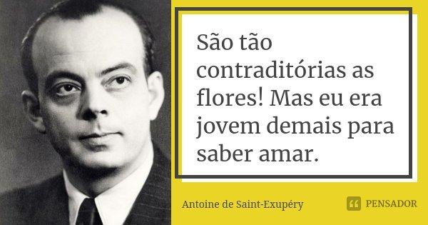 São tão contraditórias as flores! Mas eu era jovem demais para saber amar.... Frase de Antoine de Saint-Exupéry.