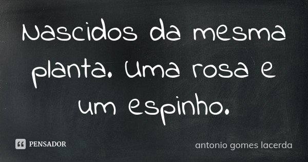 Nascidos da mesma planta. Uma rosa e um espinho.... Frase de Antonio Gomes Lacerda.