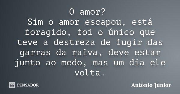 O amor? Sim o amor escapou, está foragido, foi o único que teve a destreza de fugir das garras da raiva, deve estar junto ao medo, mas um dia ele volta.... Frase de Antonio Júnior.