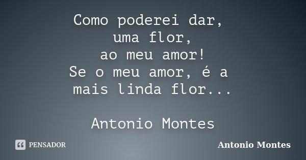 Como poderei dar, uma flor, ao meu amor! Se o meu amor, é a mais linda flor... Antonio Montes... Frase de Antonio Montes.