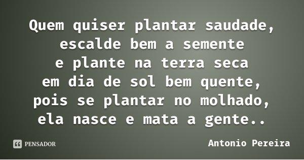 Quem quiser plantar saudade, escalde bem a semente e plante na terra seca em dia de sol bem quente, pois se plantar no molhado, ela nasce e mata a gente..... Frase de Antonio Pereira.