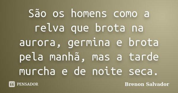 São os homens como a relva que brota na aurora, germina e brota pela manhã, mas a tarde murcha e de noite seca.... Frase de Brenon Salvador.