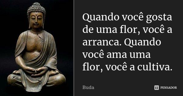 Quando você gosta de uma flor, você a arranca. Quando você ama uma flor, você a cultiva.... Frase de Buda.