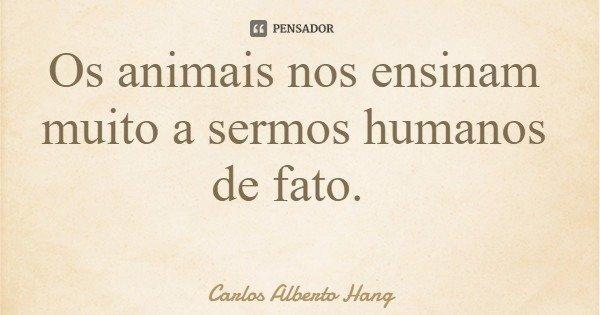 Os animais nos ensinam muito a sermos humanos de fato.... Frase de Carlos Alberto Hang.