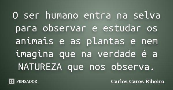 O ser humano entra na selva para observar e estudar os animais e as plantas e nem imagina que na verdade é a NATUREZA que nos observa.... Frase de Carlos Cares Ribeiro.