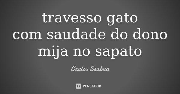 travesso gato com saudade do dono mija no sapato... Frase de Carlos Seabra.