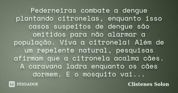Pederneiras combate a dengue plantando citronelas, enquanto isso casos suspeitos de dengue são omitidos para não alarmar a população. Viva a citronela! Além de ... Frase de Clistenes Solon.