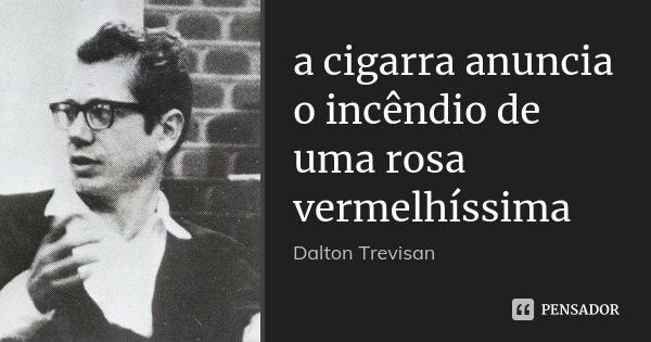 a cigarra anuncia o incêndio de uma rosa vermelhíssima... Frase de Dalton Trevisan.