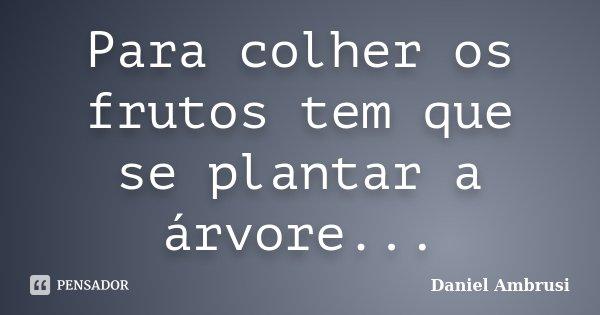Para colher os frutos tem que se plantar a árvore...... Frase de Daniel Ambrusi.