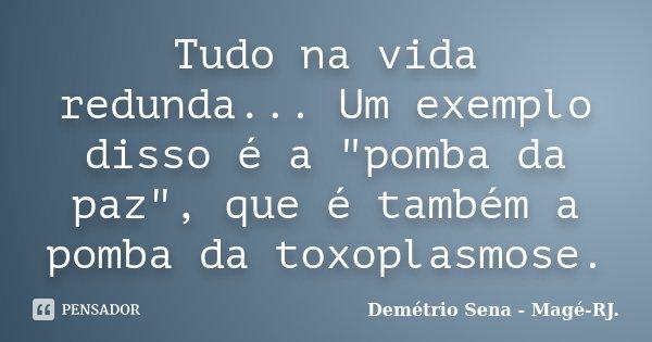 """Tudo na vida redunda... Um exemplo disso é a """"pomba da paz"""", que é também a pomba da toxoplasmose.... Frase de Demétrio Sena - Magé-RJ.."""