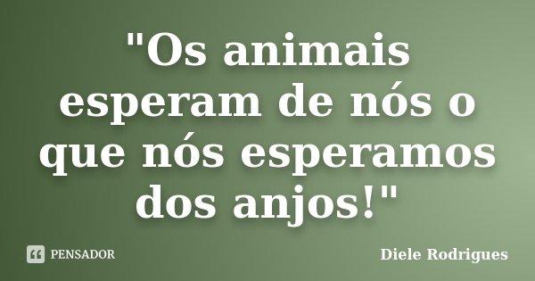 """""""Os animais esperam de nós o que nós esperamos dos anjos!""""... Frase de Diele Rodrigues."""