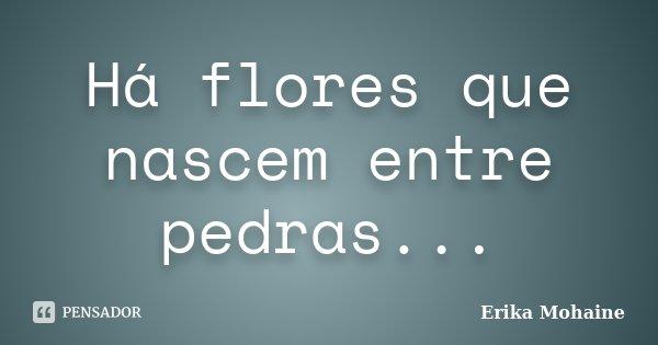 Há flores que nascem entre pedras...... Frase de Erika Mohaine.