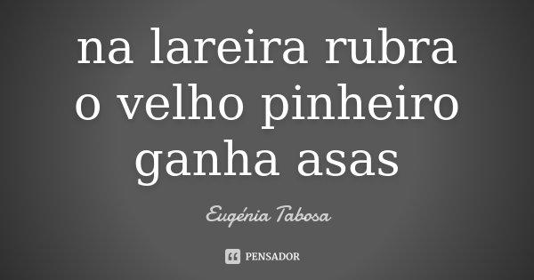 na lareira rubra o velho pinheiro ganha asas... Frase de Eugénia Tabosa.