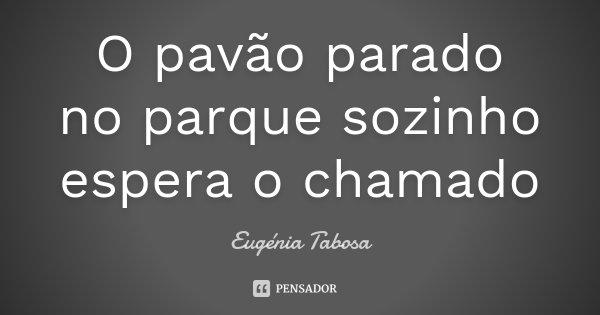 O pavão parado no parque sozinho espera o chamado... Frase de Eugénia Tabosa.