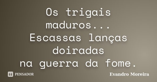 Os trigais maduros... Escassas lanças doiradas na guerra da fome.... Frase de Evandro Moreira.