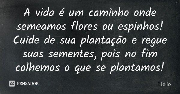 A vida é um caminho onde semeamos flores ou espinhos! Cuide de sua plantação e regue suas sementes, pois no fim colhemos o que se plantamos!... Frase de Hélio.