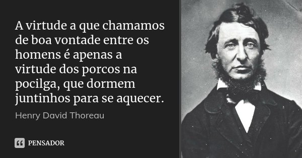 A virtude a que chamamos de boa vontade entre os homens é apenas a virtude dos porcos na pocilga, que dormem juntinhos para se aquecer.... Frase de Henry David Thoreau.