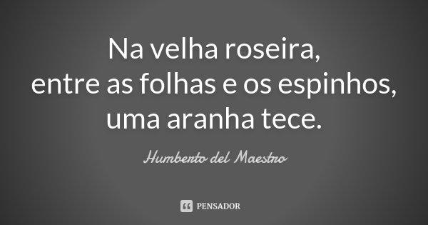 Na velha roseira, entre as folhas e os espinhos, uma aranha tece.... Frase de Humberto del Maestro.