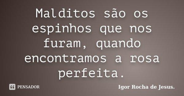 Malditos são os espinhos que nos furam, quando encontramos a rosa perfeita.... Frase de Igor Rocha de Jesus.