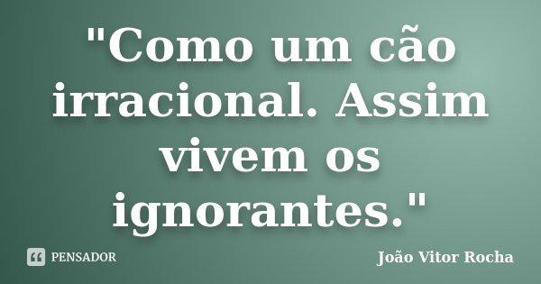 """""""Como um cão irracional. Assim vivem os ignorantes.""""... Frase de João Vitor Rocha."""