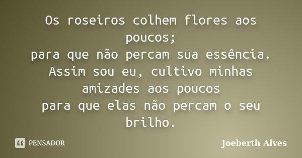 Os roseiros colhem flores aos poucos; para que não percam sua essência. Assim sou eu, cultivo minhas amizades aos poucos para que elas não percam o seu brilho.... Frase de Joeberth Alves.