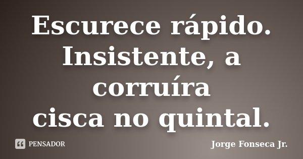 Escurece rápido. Insistente, a corruíra cisca no quintal.... Frase de Jorge Fonseca Jr..