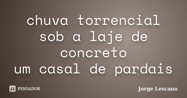 chuva torrencial sob a laje de concreto um casal de pardais... Frase de Jorge Lescano.