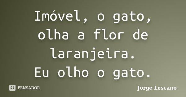 Imóvel, o gato, olha a flor de laranjeira. Eu olho o gato.... Frase de Jorge Lescano.