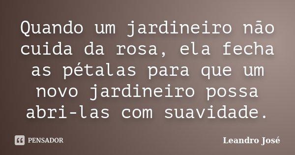 Quando um jardineiro não cuida da rosa, ela fecha as pétalas para que um novo jardineiro possa abri-las com suavidade.... Frase de Leandro José.