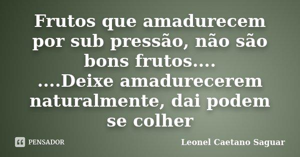 Frutos que amadurecem por sub pressão, não são bons frutos.... ....Deixe amadurecerem naturalmente, dai podem se colher... Frase de Leonel Caetano Saguar.