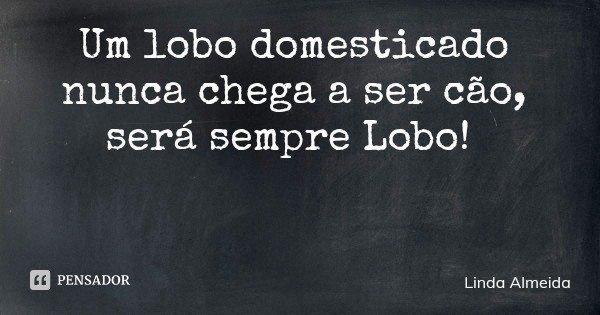 Um lobo domesticado nunca chega a ser cão, será sempre Lobo!... Frase de Linda Almeida.