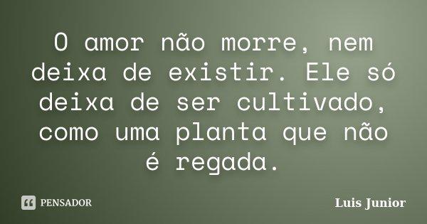 O amor não morre, nem deixa de existir. Ele só deixa de ser cultivado, como uma planta que não é regada.... Frase de Luis Junior.