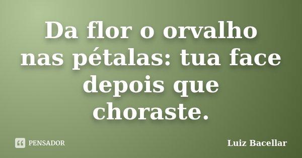 Da flor o orvalho nas pétalas: tua face depois que choraste.... Frase de Luiz Bacellar.