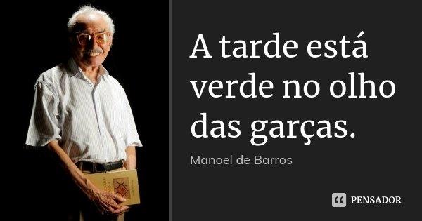A tarde está verde no olho das garças.... Frase de Manoel de Barros.