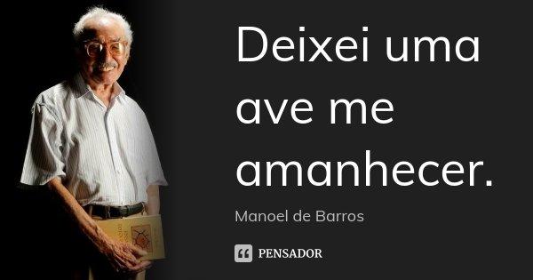 Deixei uma ave me amanhecer.... Frase de Manoel de Barros.