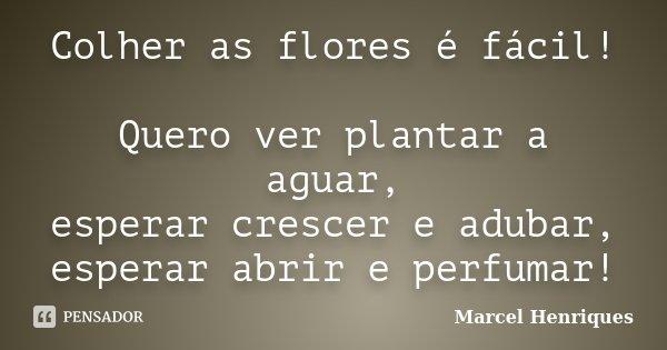Colher as flores é fácil! Quero ver plantar a aguar, esperar crescer e adubar, esperar abrir e perfumar!... Frase de Marcel Henriques.