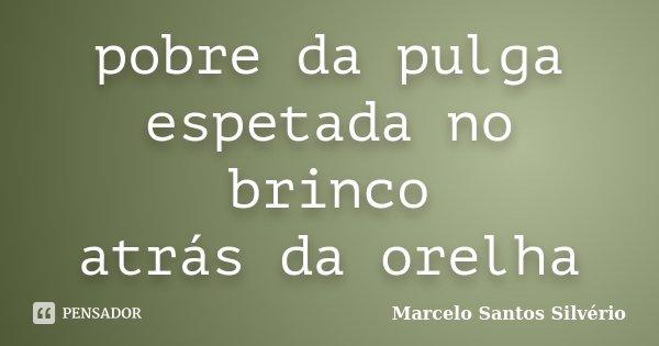 pobre da pulga espetada no brinco atrás da orelha... Frase de Marcelo Santos Silvério.