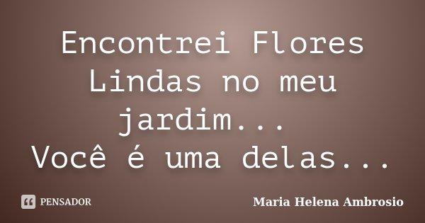 Encontrei Flores Lindas No Meu Jardim Maria Helena Ambrosio