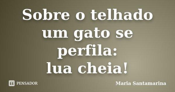 Sobre o telhado um gato se perfila: lua cheia!... Frase de Maria Santamarina.