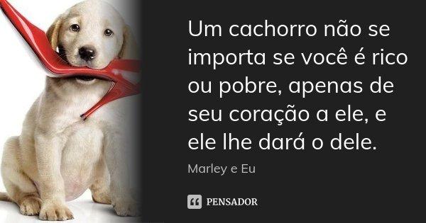 Um cachorro não se importa se você é rico ou pobre, apenas de seu coração a ele, e ele lhe dará o dele.... Frase de Marley e Eu.